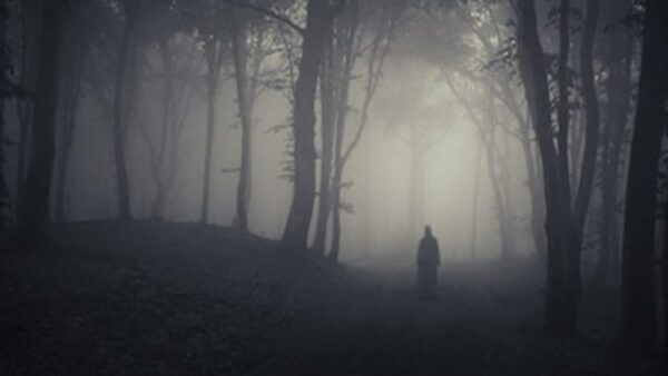 A ghost in the forest. Image Credit: Andreiuc88/Shutterstock