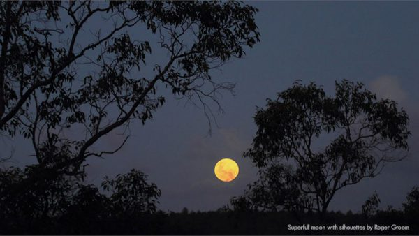 Superfull Moon With Silhouettes. Image Credit: Roger Groom